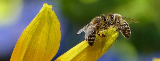 Zaplanowano pomoc na rzecz Ochrony Pszczół w rok...