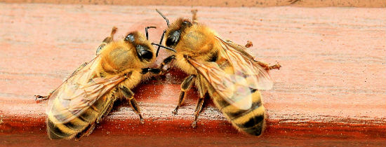 Ochrona i odbudowa populacji pszczół – zakońc...