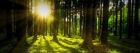 Światowy Dzień Lasu oraz Dzień Wierzb...