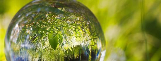 Fragment przezroczystej kuli w której odbija się otaczająca ją zieleń